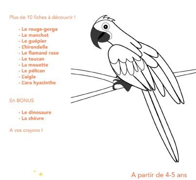 descriptif fiches oiseaux