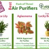 Air Purifying plants pack in Lahore Karachi, Islamabad and Karachi