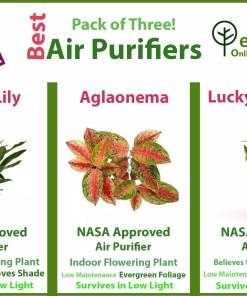 Air Purifying plants pack in Lahore Karachi, Islamabad and Karachi