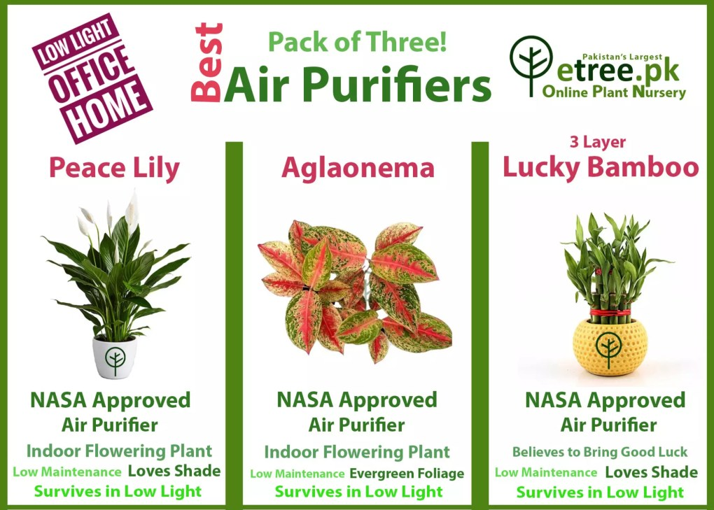 Best Air purifying packs