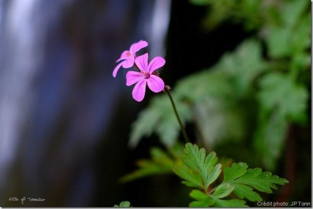 fleur élan de vie