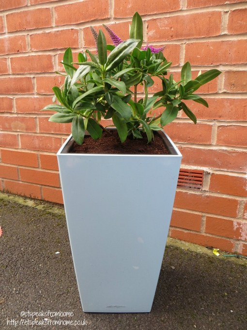lechuza self watering planter review