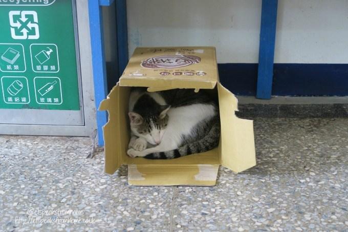 houtong cat village cat sleeping