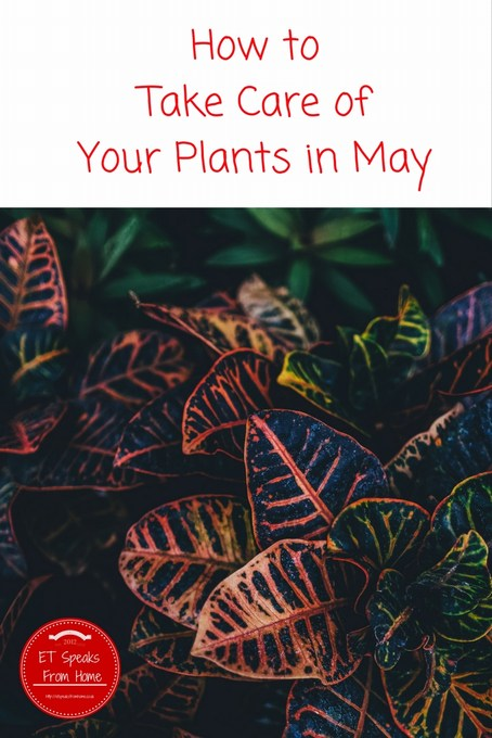 How to Take Care of Your Plants in May