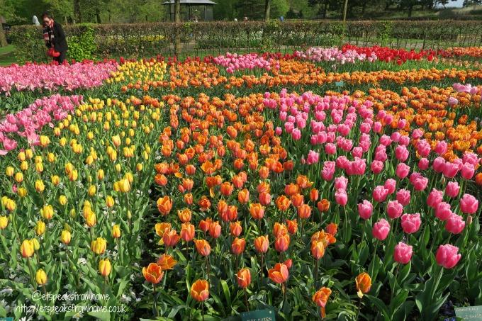 Keukenhof-Tulips in Holland colourful