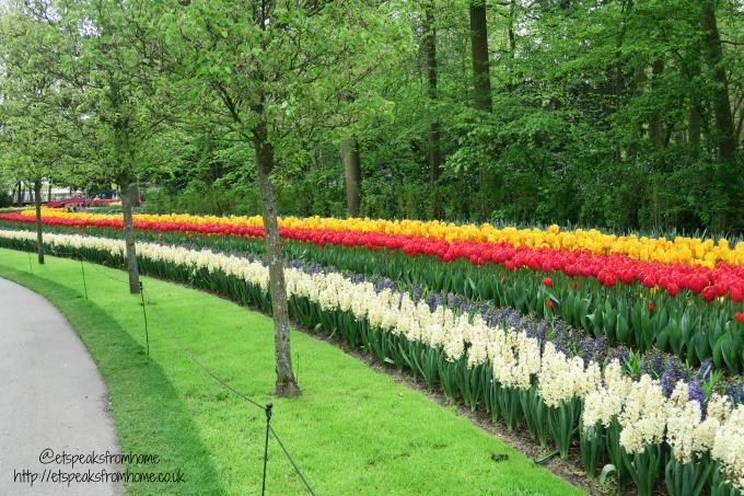 Keukenhof - Tulips in Holland row