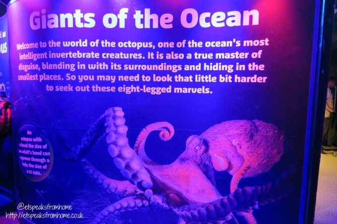 Octopus Hideout at National Sea Life Centre