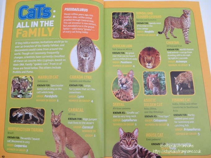 National Geographic Kids How to Speak cat