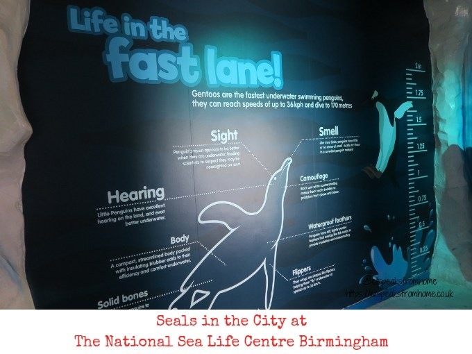 Seals in the City at The National Sea Life Centre Birmingham