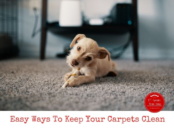 Easy Ways To Keep Your Carpets Clean