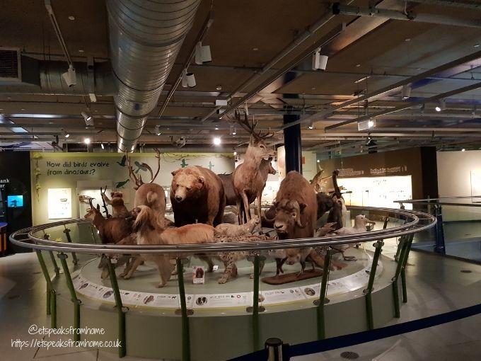 Thinktank Birmingham Science Museum animals