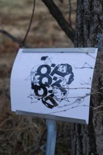 grove project. derek beaulieu. black walnut grove University of Guelph Agricultural College, spring 2014.