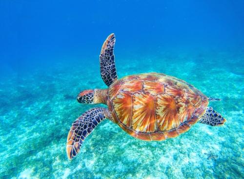 Schwimmen mit Meeresschildkröten – ein Traum wird wahr in Palm Beach, Florida
