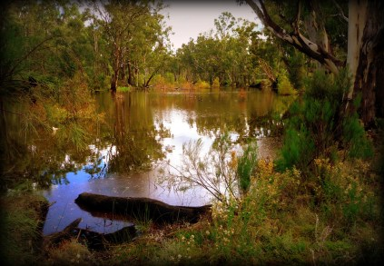 Millewa billabong. From 'Wonders of the Big Wet'