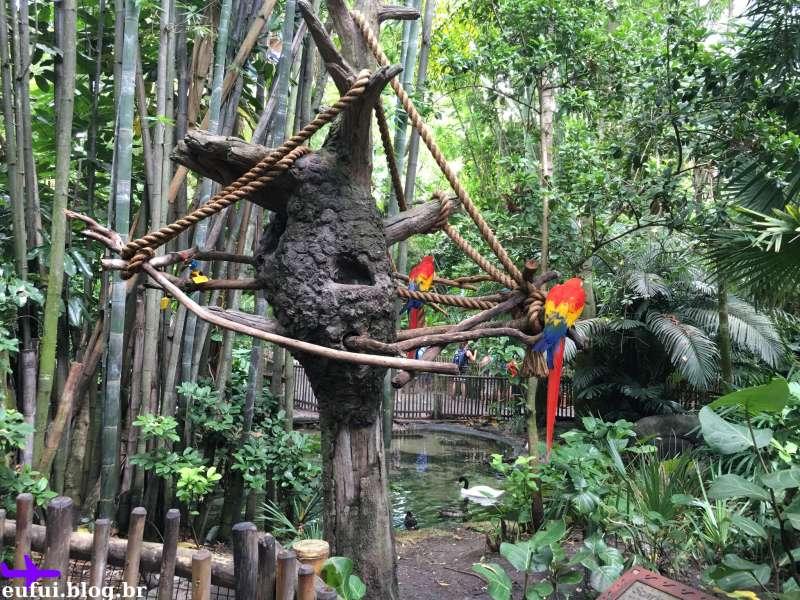 orlando animal kingdom walt disney world oasis