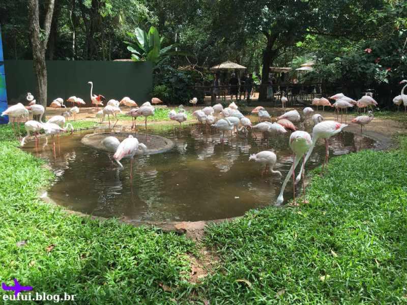 Flamingos no Parque das Aves em Foz do Iguaçu