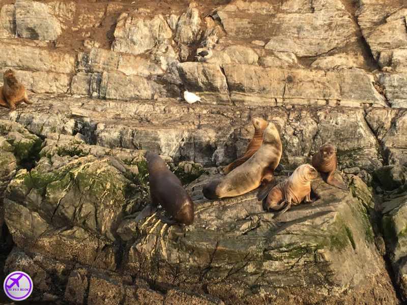 Navegação pelo Canal do Beagle em Ushuaia - Ilha dos Lobos Marinhos