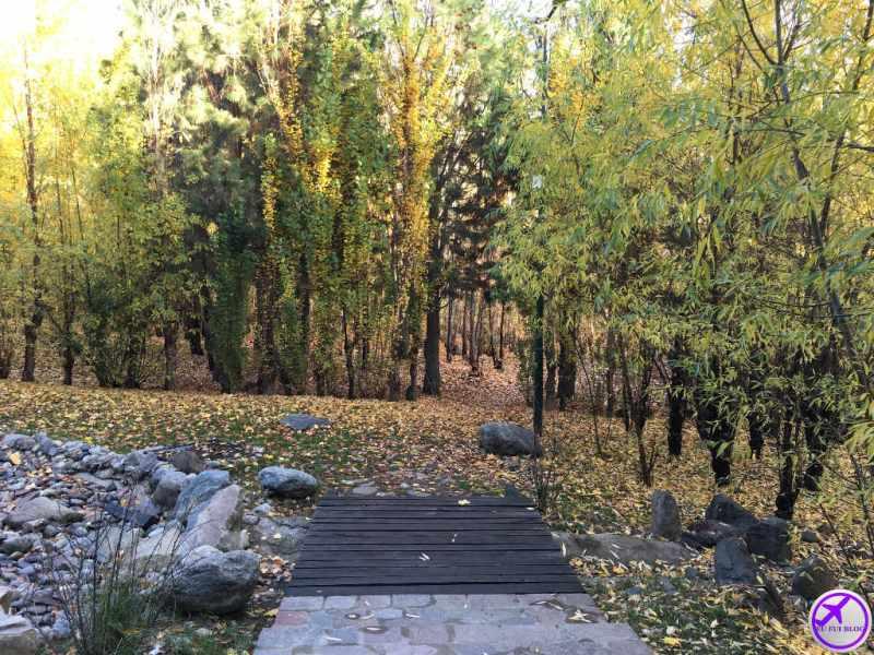 Parques e Arvores de El Calafate - Argentina