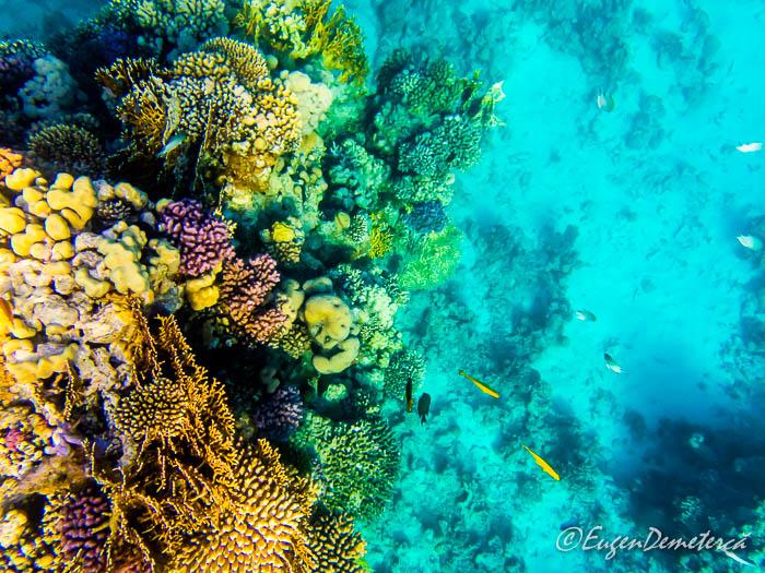 Coral si pesti in Marea Rosie