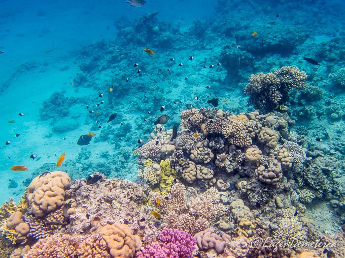 Corali si multi pesti in Marea Rosie