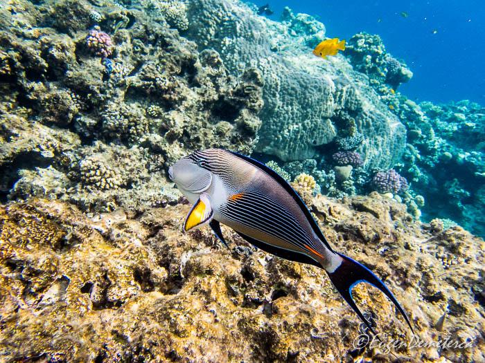 Peste exotic deasupra coralului