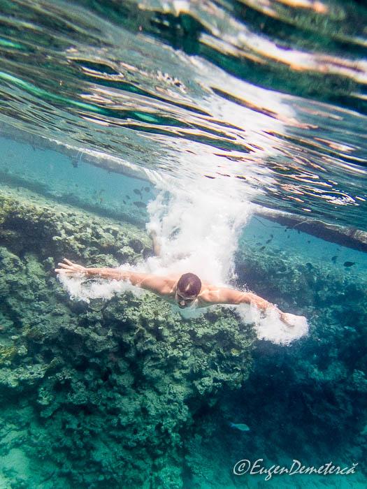 Saritor in apa la sharksbay, Sharm el-Sheikh