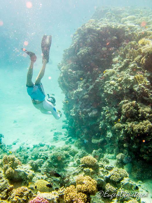 Scufundator langa coral