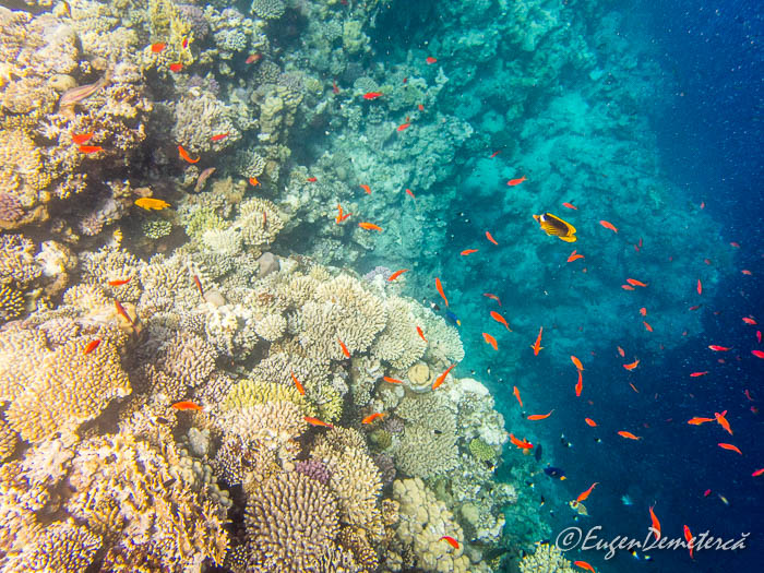 Corali si pesti rosii la Blue Hole - Dahab, Marea Rosie
