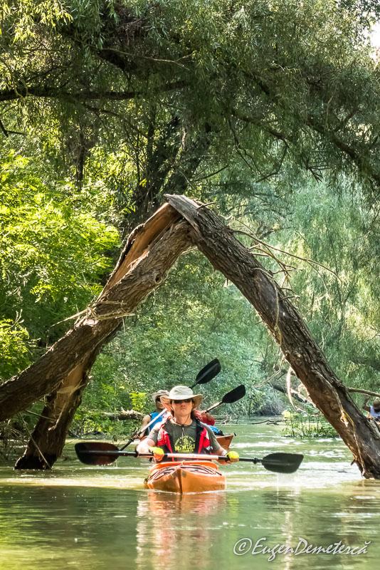 Arcada lemnoasa Delta - Călătoria, cea mai bună alegere pentru dezvoltare personală