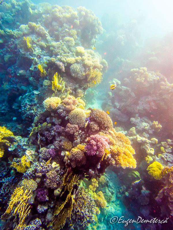 Corali Egipt efect lumina - Egipt, destinaţia pentru vacanţe exotice la super-preţuri!