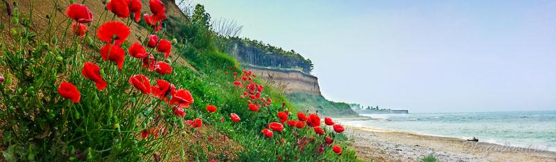 Maci plaja Bulgaria - Călătoria, cea mai bună alegere pentru dezvoltare personală