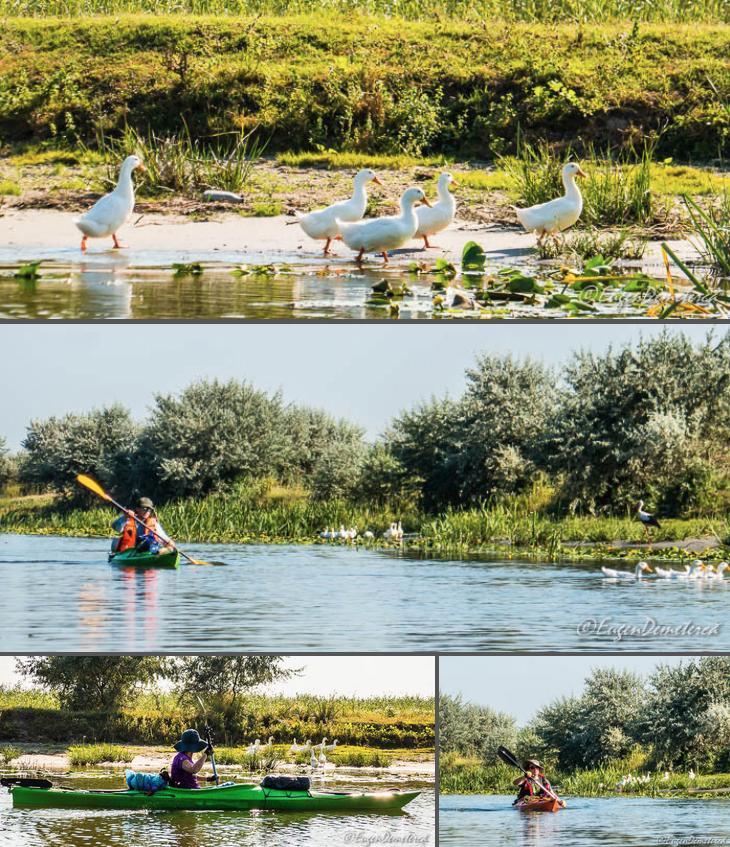 4 pasari domestice in Delta - Cu caiacul, din Deltă până la mare
