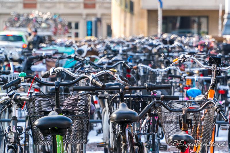 DSC0109 - Copenhaga, printre nămeți primăvărateci