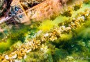 Halkidiki, over and under the sea