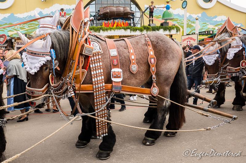 1170602 - Dezmățul de Oktoberfest