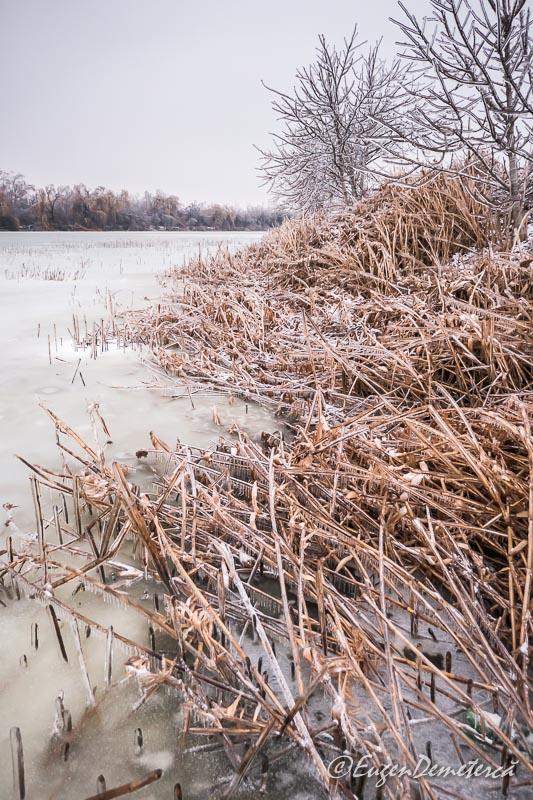 Lac si vegetatie acvatica inghetata