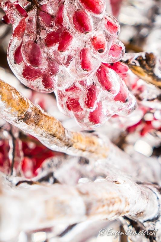 Fructe rosii in gheata 4