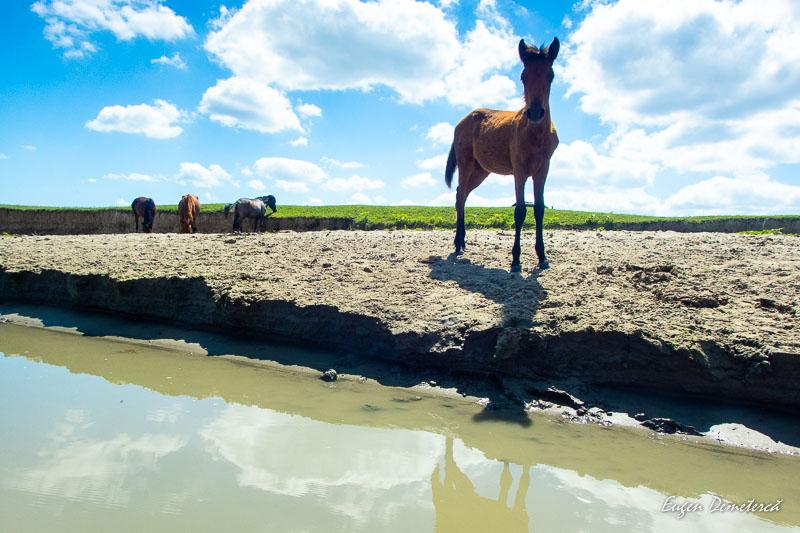 P8145145 - 5 zile cu caiacul prin Deltă și pe Mare