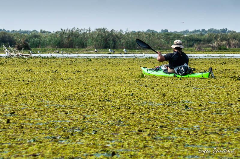Caiac pe vegetatie acvatica in Delta Dunarii