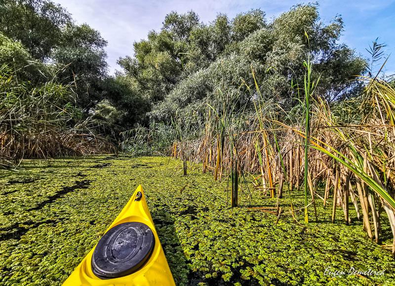 Caiac pe vegetatie acvatica in Delta Dunarii 5