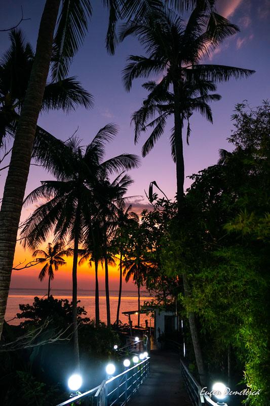 1000899 - Magia portocalie a Thailandei
