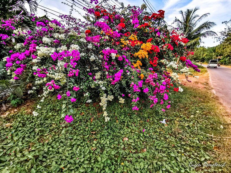 IMG 20200107 174312 - Koh Lanta - insula exotică cu plaje aurii