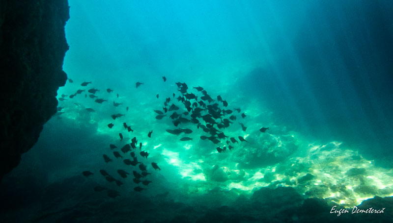 P1065490 - Minunata Thailandă de sub ape
