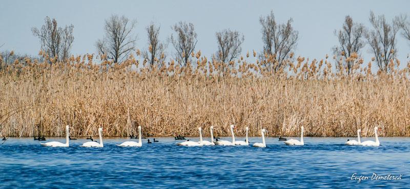 1045348 - Caiaceală de primăvară în Delta Neajlovului