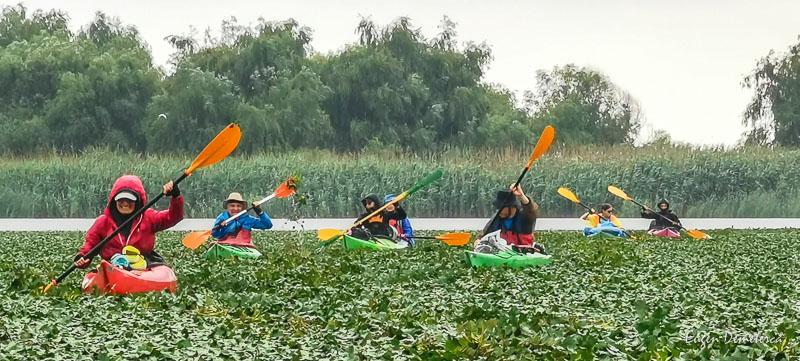 IMG 20210620 141406 - Ciclonizare în Delta Dunării