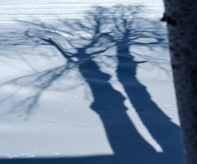 Pictures of shadows of trees