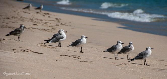 Gulls on a beach