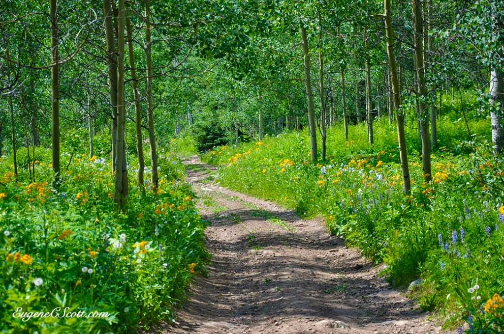 A path in the Columbines