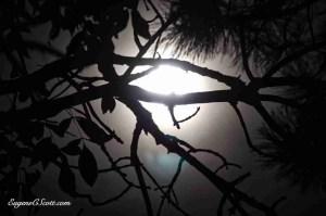 Moon light in trees