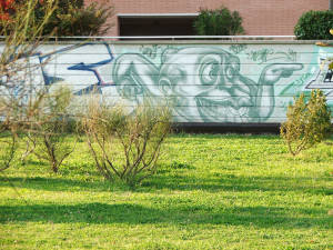 Graffiti Bologna-596